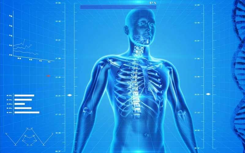Der menschliche Körper digitalisiert